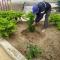 AGRADECEMOS POR LA DONACION DE PLANTAS QUE FUERON SEMBRADAS EN EL PARQUE DEL BARRIO 26 DE ABRIL